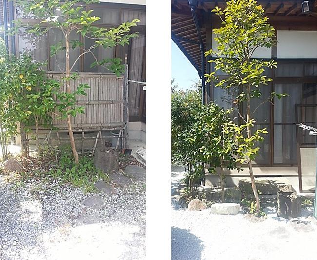 garden_003_img_005